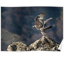Golden eagle Take-off Poster