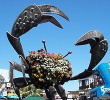 A wonderful crab  by daffodil