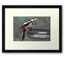 Great Spotted Woodpecker Eating Peanut Cake Framed Print