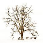 Tree & Horses ... an image I captured on film from the '80s by Malcolm Heberle