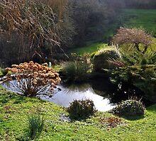 A small part of Doreen's lovely garden............  by lynn carter