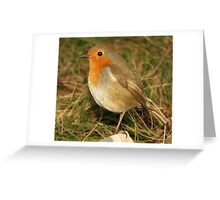 Young Wild Robin Greeting Card
