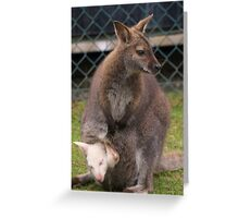 Wallaby with Albino Joey in pouch Greeting Card