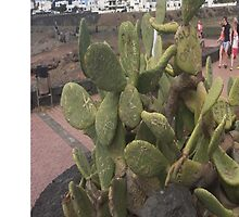 Cactus is our Friend by Mockery Stockery