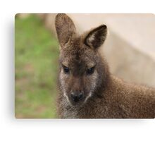Young Female Wallaby Canvas Print
