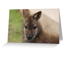 Young Female Wallaby Greeting Card