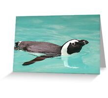 Young Penguin In Pool Greeting Card