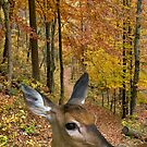 Fall Deer by BigRPhoto