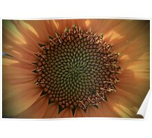 Sunflower Macro II Poster