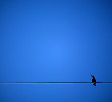 bird on blue by Whit