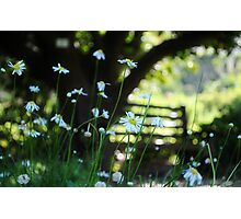Amber afternoon ambience Photographic Print