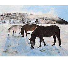 Highland Ponies Photographic Print