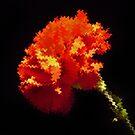 Red Flower by MichelleR