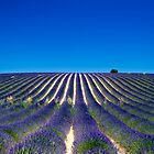 Lavander fields by andyw
