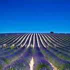 Lavander fields by andyw