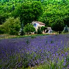 Provence by andyw