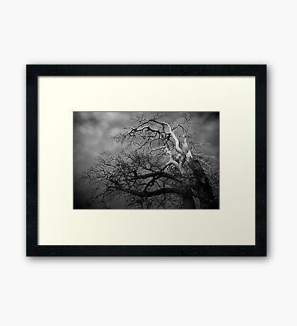 Trees #01 Framed Print
