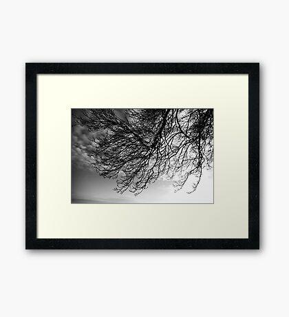 Trees #02 Framed Print