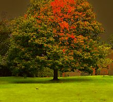 TREE IN THE GROUNDS OF CASTLE ACRE PRIORY RUINS by ANNETTE HAGGER