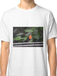 National Aviary Pittsburgh Series - 22 Classic T-Shirt