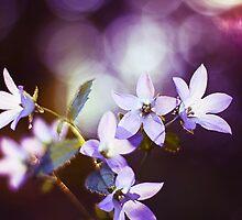 Purple light by SylviaCook