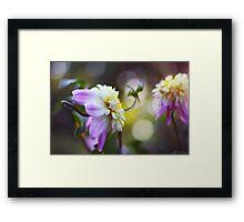 In a dahlia garden Framed Print