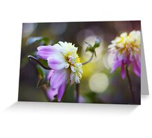 In a dahlia garden Greeting Card
