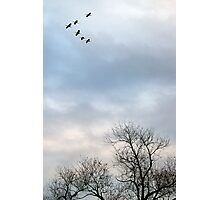 Cranes, Trees and Sky 2 Photographic Print