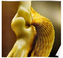 Shell series. Number 2 Poster