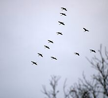 Cranes and Trees 3 by rdshaw