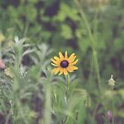 Black Eyed Susan by Bethany Helzer