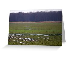 Cranes in the Field Greeting Card