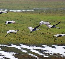 Cranes Landing 3 by rdshaw