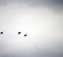 Three Cranes by rdshaw