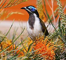 Blue-faced Honey Eater by Nicholas Ward