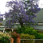 Australian Jacaranda by Jan Richardson