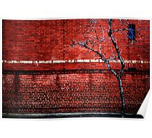 Red Brick Wall, Bare Tree and Blue Window Poster