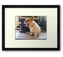 Frenchie Tongue Framed Print