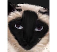 Ollie - Ricky Gervais's Gorgeous Cat Photographic Print