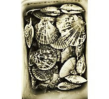 Vintage scallop shell collection in sepia Photographic Print