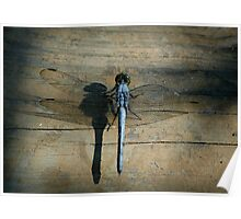Dragonfly on Deck Poster