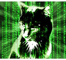 Matrix Cat by AnnArtshock
