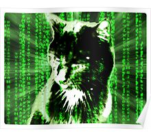 Matrix Cat Poster