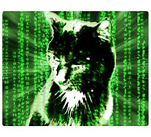 Matrix Cat Photographic Print
