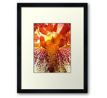 Brown and yellow Iris Framed Print