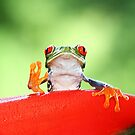 """Live long and Prosper"" Red-eyed Tree Frog by Jim Cumming"