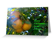 Citrus splendor Greeting Card