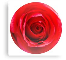 Red rose Close up 2 Canvas Print