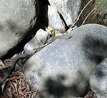 Snake by Cheryl Parkes