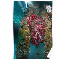 Soft corals on wooden jetty  Poster